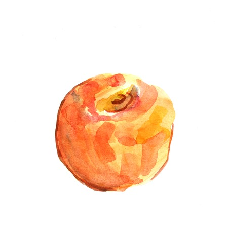Illustration of a peach  Watercolor illustration