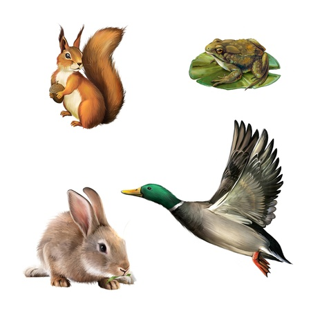 Squirrel, toad, rabbit and drake photo