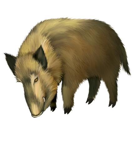 pig out: Boar