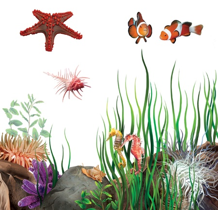 ocean view: seabed  On the bottom of the ocean  Sea star, clown fish, sea horses and shells  Stock Photo