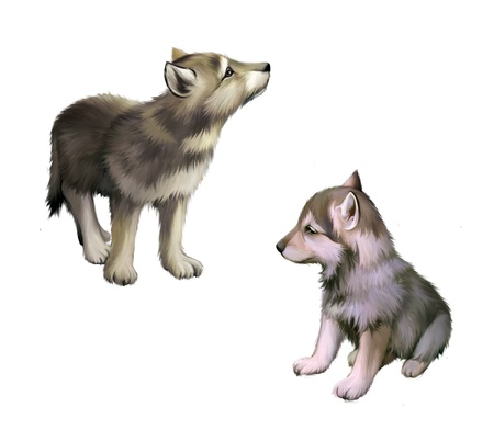 Two baby wolfs, puppies  photo