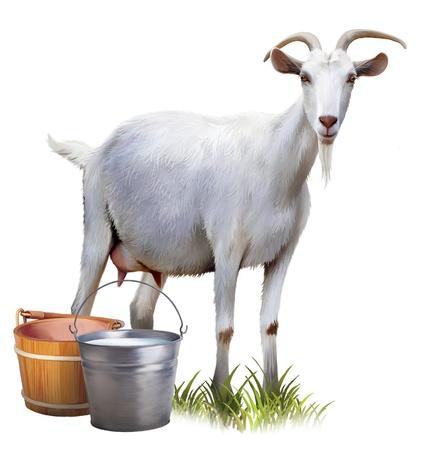 cabra: Cabra blanca con cubos llenos de leche Foto de archivo