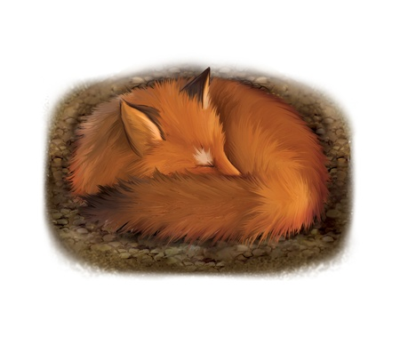 Sleeping red fox in its hole Stock Photo - 18379209