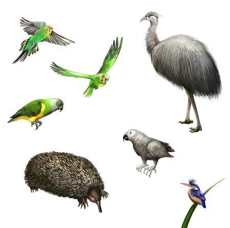emu: Avestruz Emu, periquitos, loro gris, loro verde, las aves equidna de Australia y de los animales