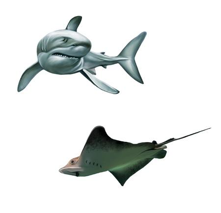 Shark and fish stingray Stock Photo