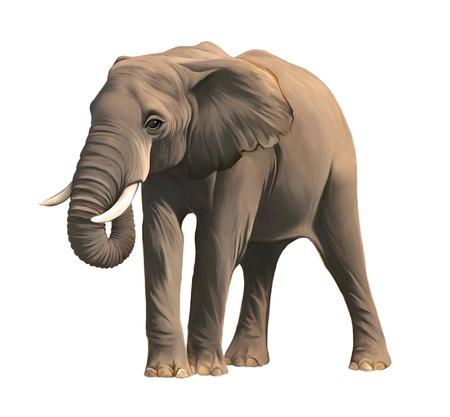betray: Gran Elefante africano macho Foto de archivo