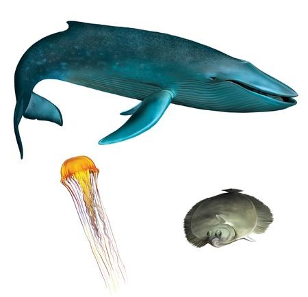 whale: Baleine bleue orange méduse, méduse et la limande à queue de poisson