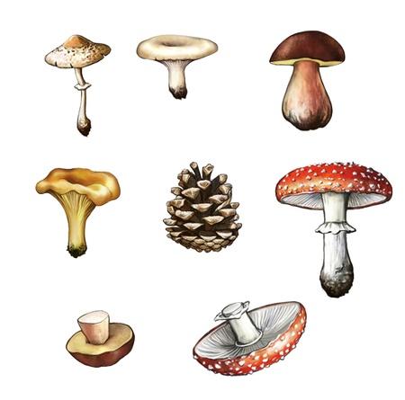 vegetables white background: Mushrooms  Amanita, grebe, cep, boletus, chanterelle, bump, champignon, fir-cone