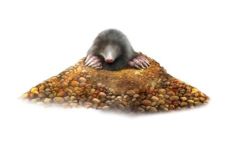 animal mole: animal Mole in molehill showing claws, European Mole, Talpa europaea  molehill Stock Photo