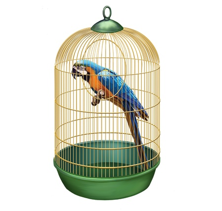 large bird: Parrot in a retro cage  Big Blue macaw  Ara ararauna  in bird cage