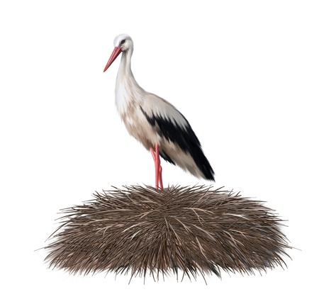 ciconiiformes: Adult stork standing in its nest  Spring