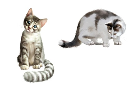 Small gray kitten looking at a camera, adult cat alert looking down, white and gray Stock Photo - 18411583