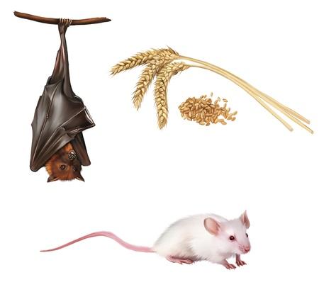 fruit bat: Bat hanging on a tree branch Malayan bat, Fruit bat, White cute mouse  Wheat ears