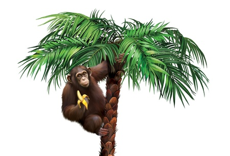 Brown monkey on palm tree eating a banana
