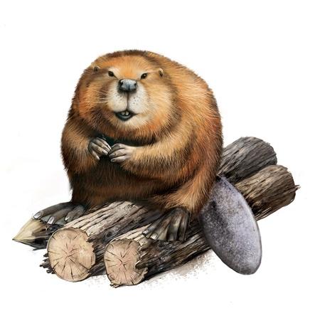castor: Beaver adultos sentados sobre troncos