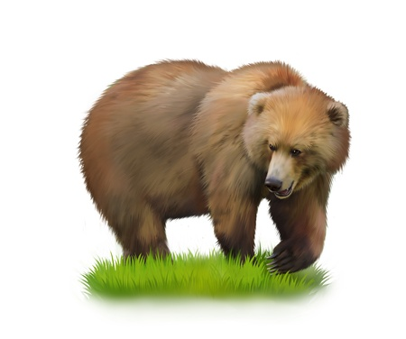 walking away: Walking adult bear on a grass  Isolated realistic illustration on white background Stock Photo