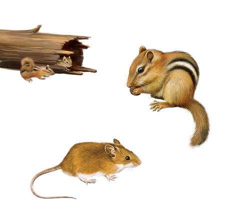 ardilla: Roedores chipmunk que come una nuez, de color amarillo marrón ratón, dos ardillas en un tronco caído, aislado en fondo blanco