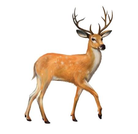 흰색 배경에 큰 뿔 격리 된 그림과 함께 아름 다운 사슴