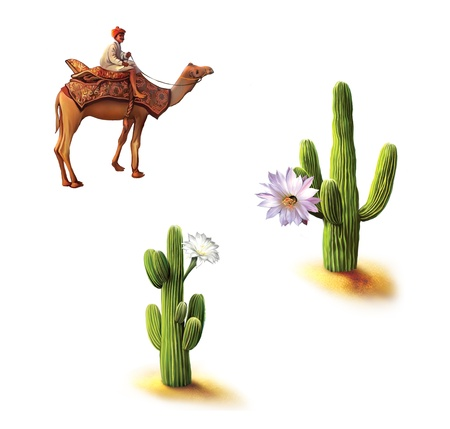Desert, Bedouin on camel, saguaro cactus with flowers, Opuntia cactus, Natural habitat photo