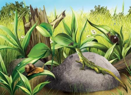 gastropod: Lisard hunting fly Snails, green fresh grass, log Stock Photo