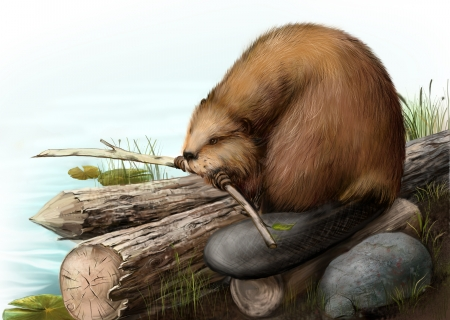 beaver tail: Illustration of beaver sitting on a log