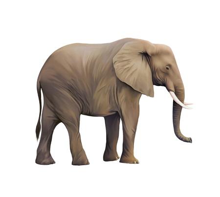 oxidant: Large male African Elephant Stock Photo