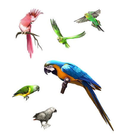 Pink, Gray and green parrot, macaw, Budgerigar, Isolated Illustration on white background
