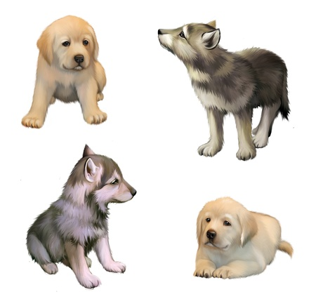cute little puppies of yellow labrador retriever and siberian husky  isolated illustration on white background