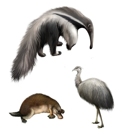 Giant anteater, Ostrich Emu and platypus, Isolated on white background  Stock Photo