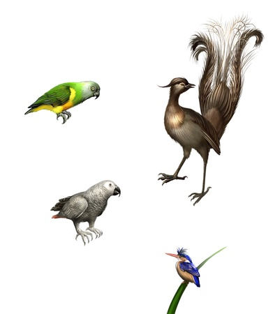 enthroned: Exotic birds  budgies,Grey Parrot, green Parrot and lyrebird