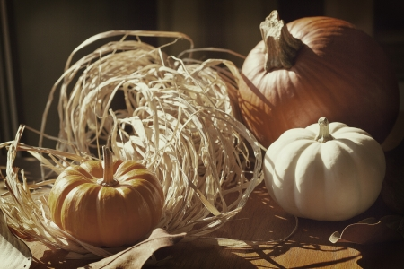 Thanksgiving Background with Pumpkins. Retro card