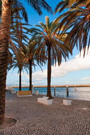 Palm avenue on quay of Lisbon photo