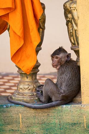 Monkey in a Sihanoukville Buddhist temple Wat Leu Stock Photo