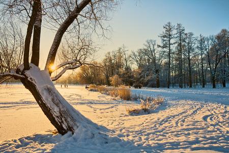 Beautiful winter landscape at sunset photo