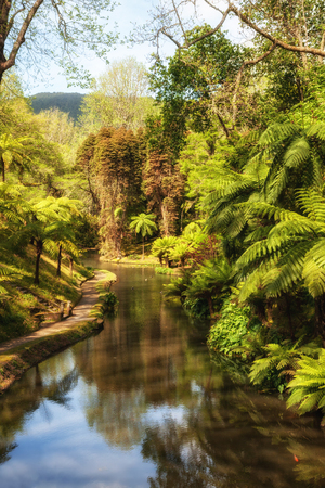 Giant ferns near the pond in the old beautiful park Terra Nostra, Furnas, Azores