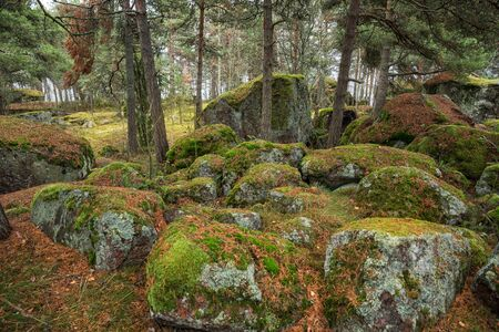 Kuusinen island, lots of huge stones covered with green moss and lichens in a pine forest. Finnish landscape, Kotka, Finland Stok Fotoğraf