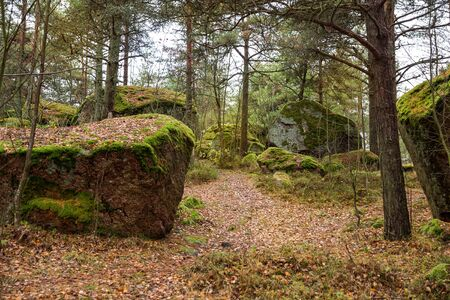 Finnish landscape, a path in the autumn forest between huge stones covered with green moss and lichens. Kuusinen Island, Kotka, Finland