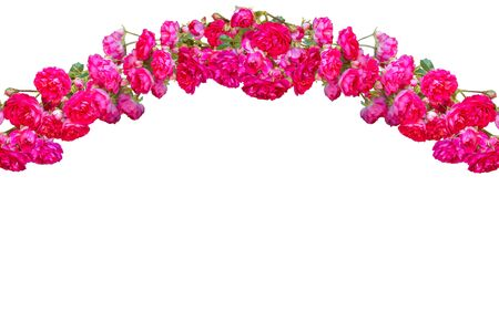 Garland of pink roses isolated on a white background with copy space for text. Collage of roses arranged in a line in an arc shape