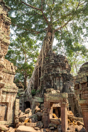 Huge tree banyan on the ruins of the ancient Hindu Khmer temple Ta Prohm in Angkor, Cambodia