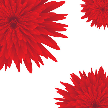 aster: Red aster on white background illustration