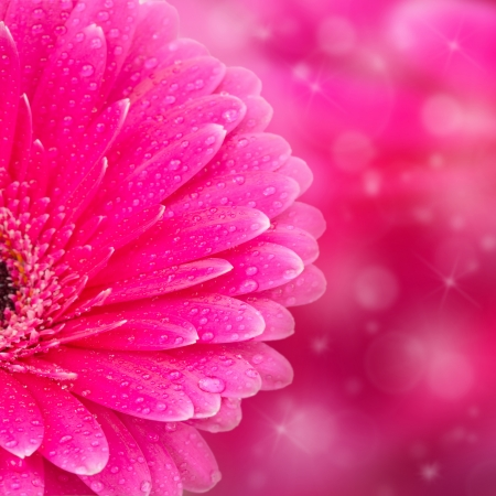 Abstract pink floral background with bokeh Stock Photo - 17513009