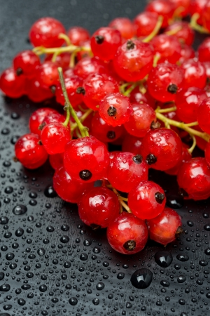red currant with drops of water on black background, vertical close-up photo