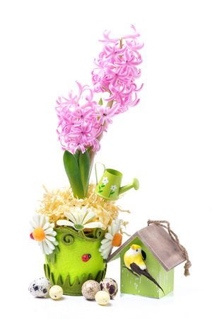 composition with pink hyacinth, birdhouse and eggs for Easter, isolated on white photo