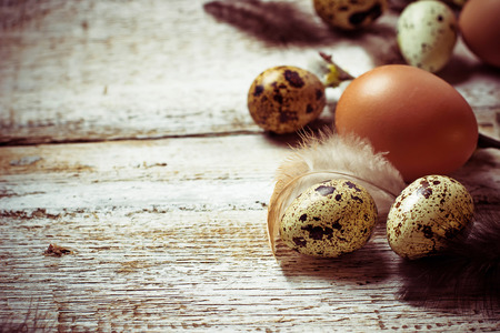 willows: Chicken and quail eggs with pussy willows. Toned image. Selective focus. Copy space background Stock Photo