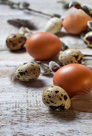 willows: Chicken and quail eggs with pussy willows. Selective focus Stock Photo