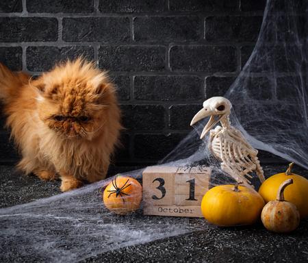 Halloween background with wooden calendar Foto de archivo - 106413256