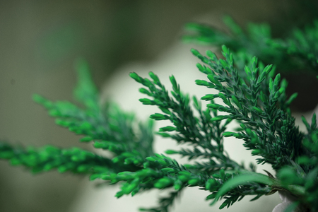 Blurred defocused  background with  leaves 写真素材