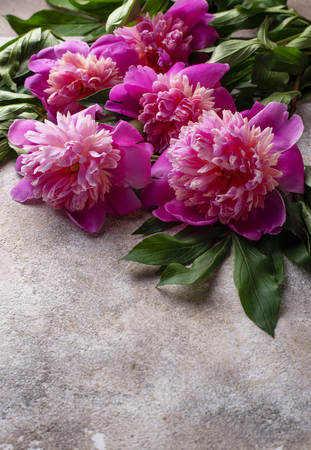 Pink peony flowers on light background. Space for text