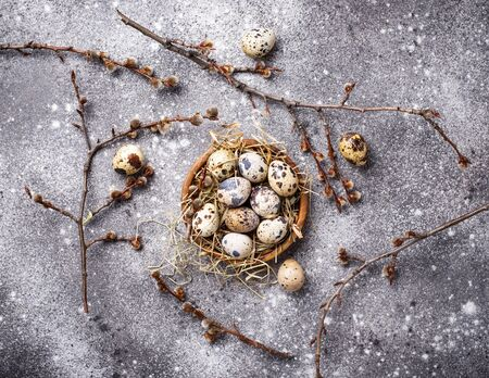 Quail eggs and pussy willow on grey  background Imagens