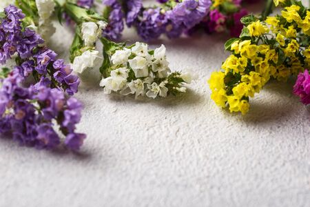 Colorful Limonium flower on white background Stok Fotoğraf